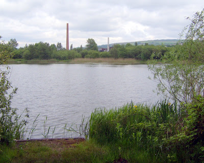 Square Pond Neath Carp Coarse And Swansea Fishing In And Around Swansea