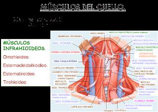 Los ejercicios para el cuello a la osteocondrosis con las estampas