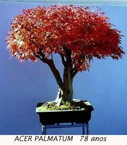 Lr moveis cultivo de bonsai mini curso - Cultivo de bonsai ...