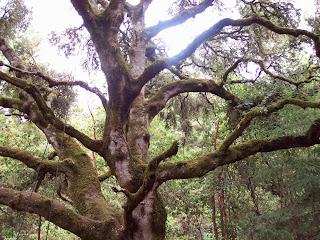 spiritual teacher, old tree, spiritual awakening