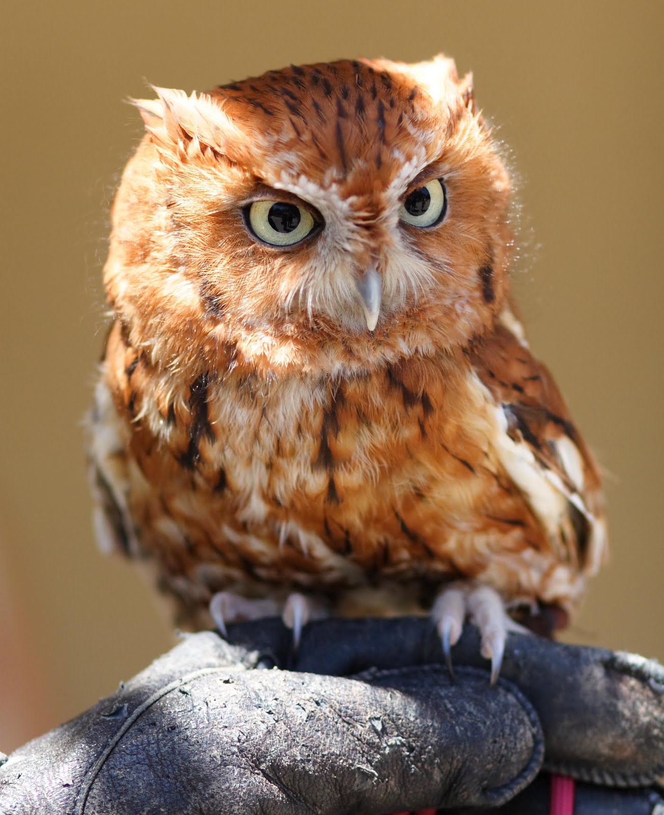 The Gorgeous Princess...: >> Do you find owls cute?? Check ...