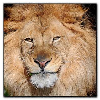 SMILE BE HAPPY: Lion smile