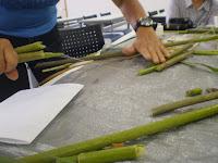 折った茎から細い糸がでてそれを撚ります