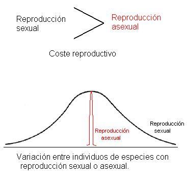 Reproduccion gallinas asexual
