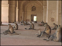HOW SAFE IS DELHI-- WITH ALL THE MONKEYS?