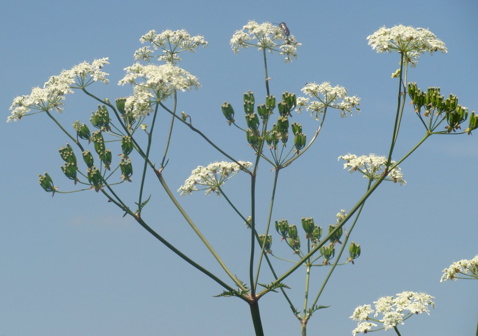 Stickers On Wall For Bedroom 1000 Images About Cowparsley On Pinterest Blue