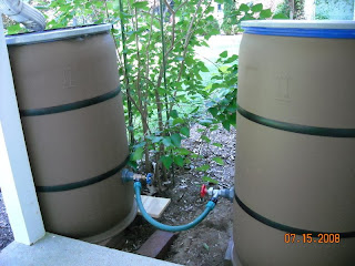 Plastic barrels painted to be rain barrels