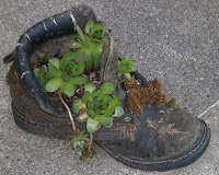 old boot recycled as garden planter