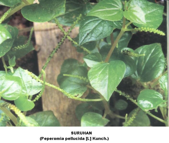 Pecinta Alam Soponyono: Asam Urat Tinggi (Gout
