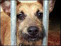 Monu's Photoblog: Bangalore Stray Dog Issue