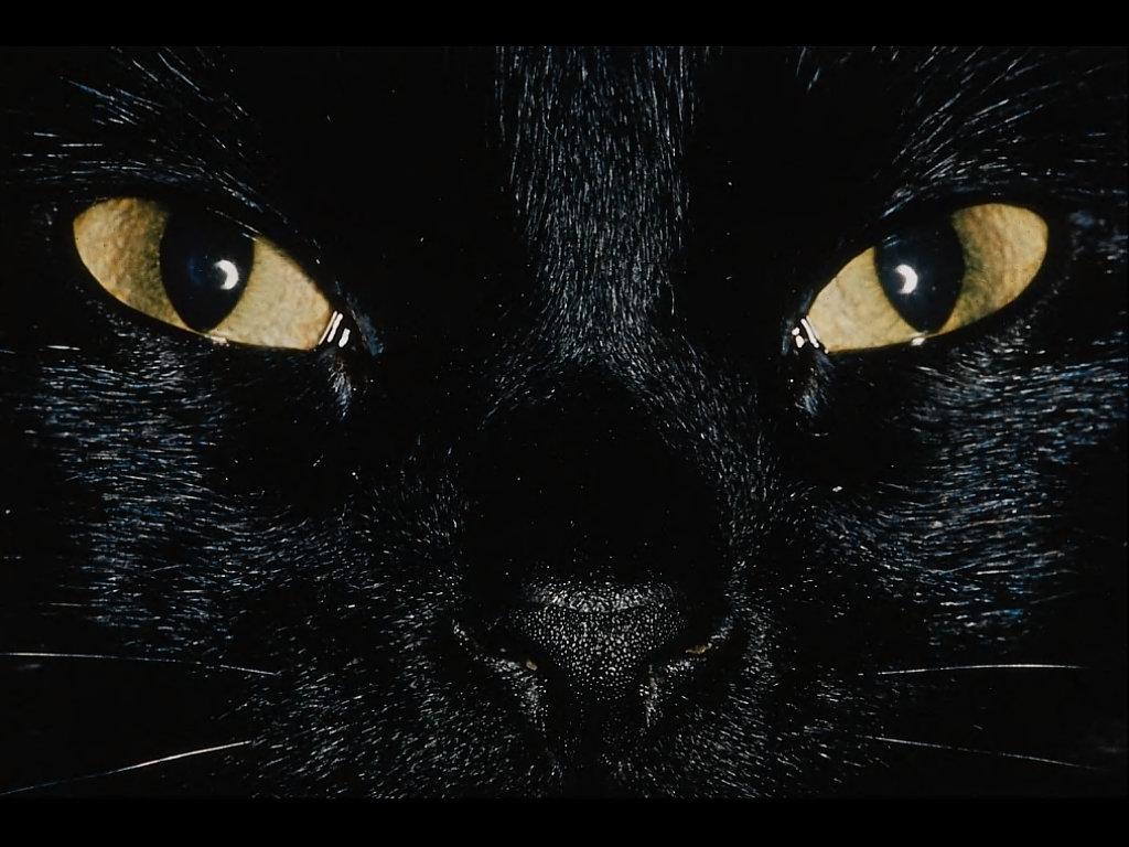 Cat Wallpaper Black Bitcoin Mining Algorithm Java
