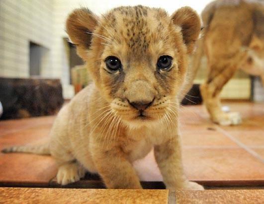 Unique Animals Blogs: Cute Baby Animals 18, Baby Animals