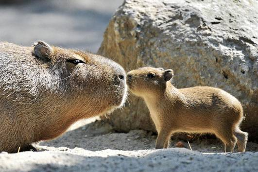Cute Animal Soccer Wallpaper Pictures Animals Zoo Park Cute Baby Animals 18 Baby Animals Cute