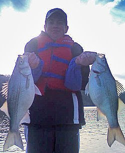Broken bow sand bass running for Broken bow lake fishing report