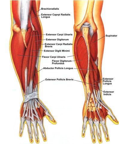 Train Out Pain Working The Extensors Of The Hand Amp Wrist