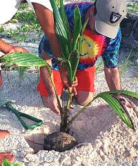 Palm Tree Planting Step By