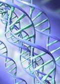 [genes.jpg]