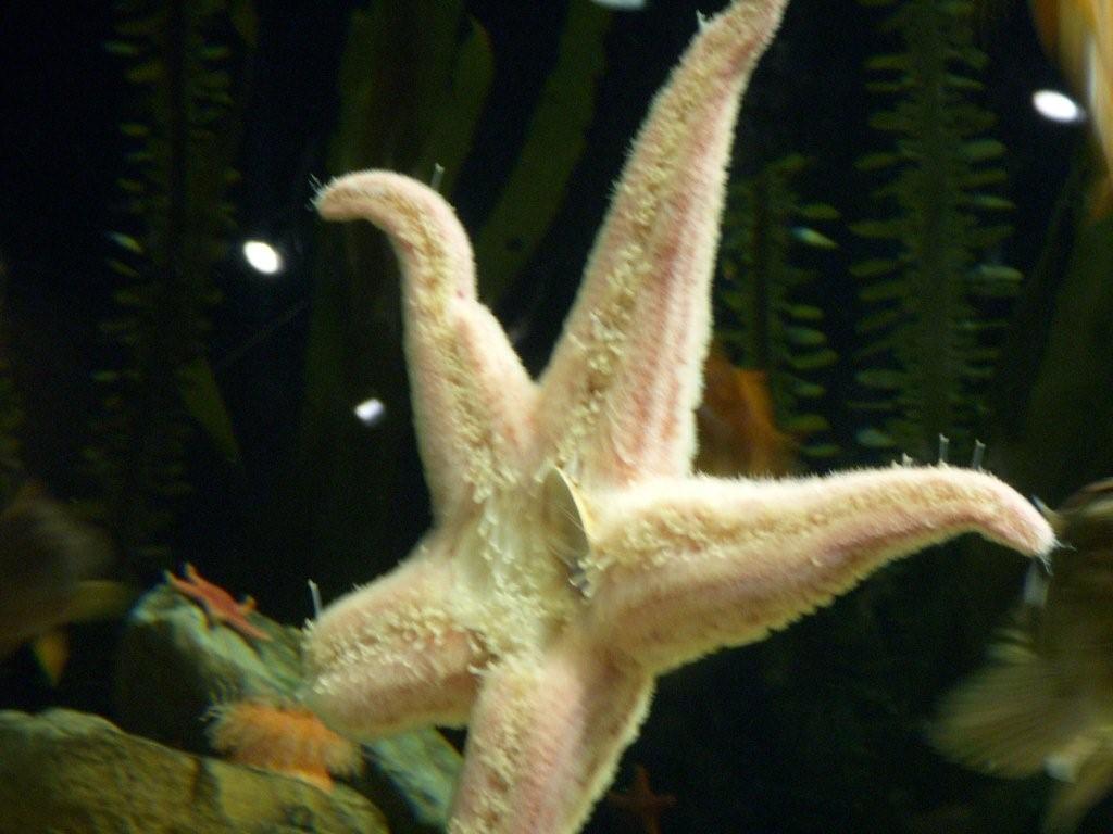 [starfish+blog]