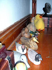 Duck Collection