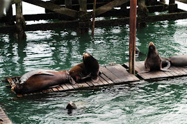 OregonCoast sea lions