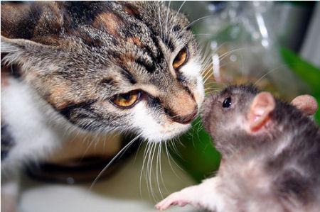 اغرب صداقات الحيوانات