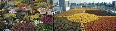 Cool and Creative Green Roofs (21)  4