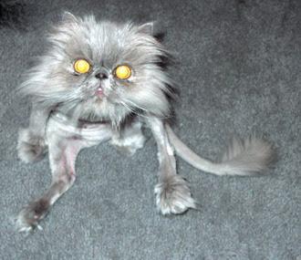 세상은 쇼다 :: 귀여운 고양이 사진 모음