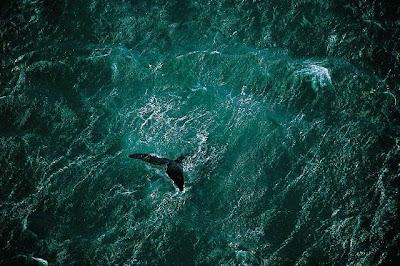 Aerial Photos (14) 3