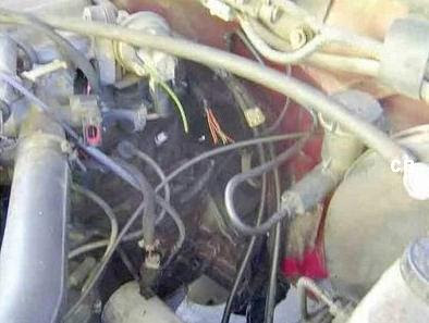 Dog in engine compartment (4) 4