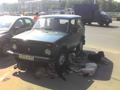 dogs relaxing under a car