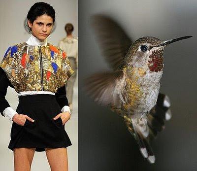 Fashion Dresses Hummingbird Theme