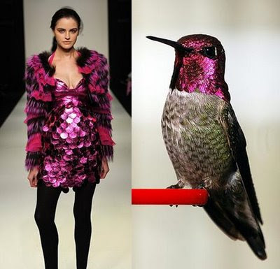Fashion Dresses - Hummingbird Theme (9) 1