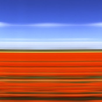 Spectacular Display Of Color - Tulip Fields (11) 2
