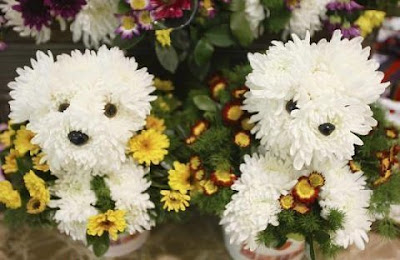 Flower Dog Bouquet (3) 2