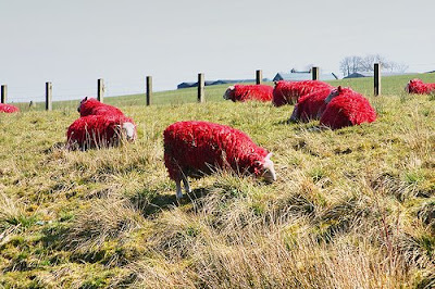 Painted Sheep (7) 4
