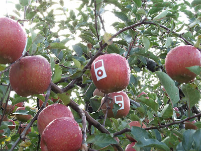 Apple Logo On Apple Tree (6) 3