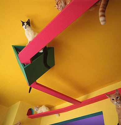 Awesome Cat-Friendly House Design 4