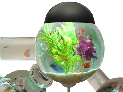 Cool Aquariums and Unusual Fish Tanks Designs (50) 23