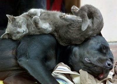 Cute Sleeping Animals (30) 18