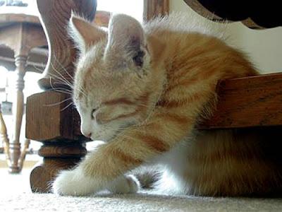 Cute Sleeping Animals (30) 12