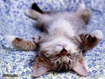 Cute Sleeping Animals (30) 21