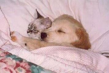 Cute Sleeping Animals (30) 19