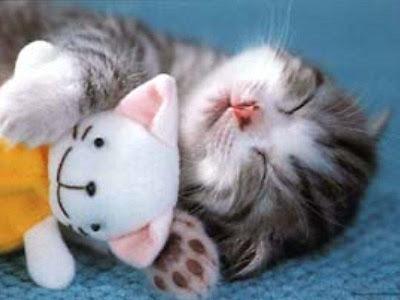 Cute Sleeping Animals (30) 29
