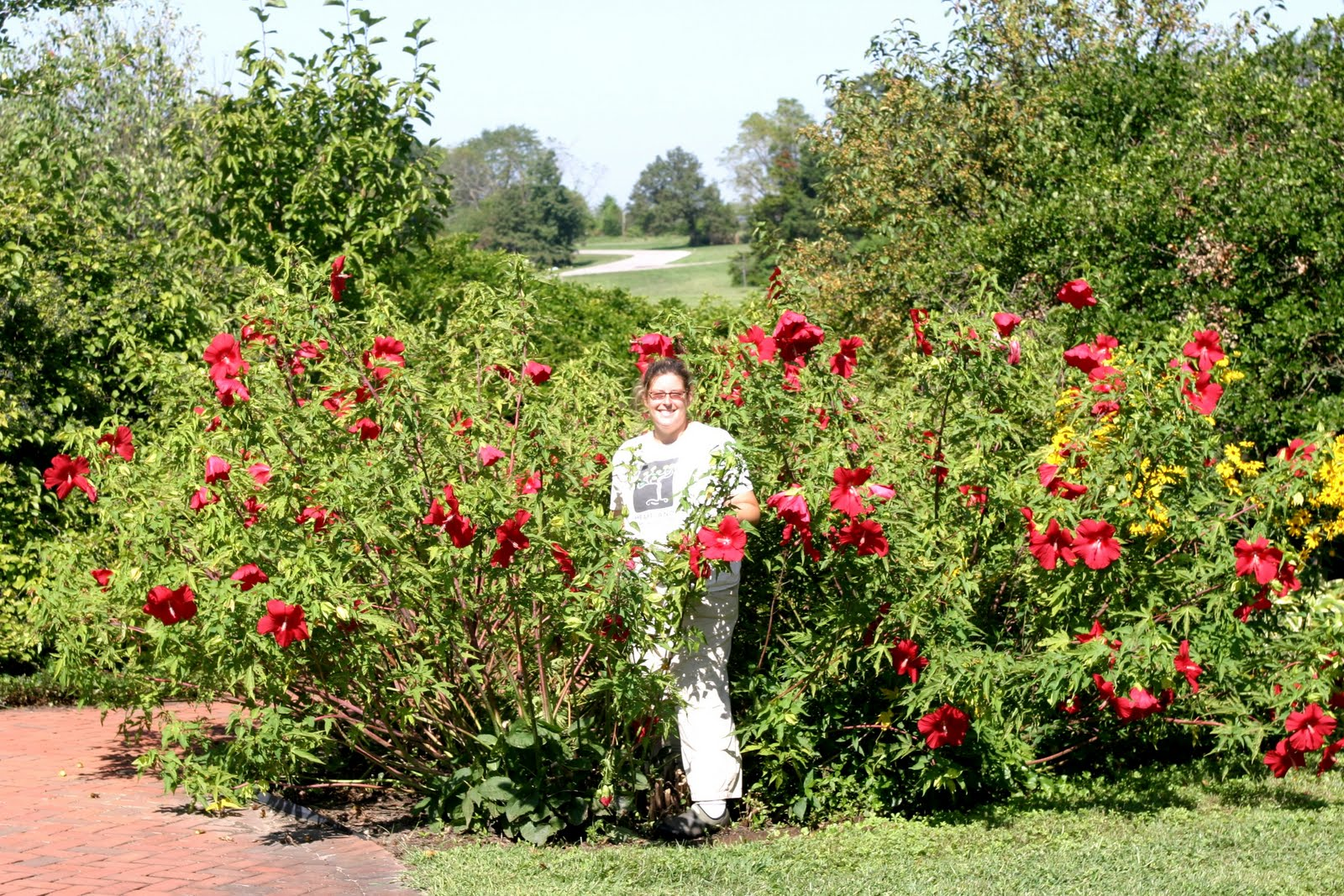 List of Synonyms and Antonyms of the Word: hardy hibiscus tree