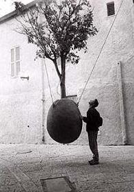 A Tree Grows in Jaffa, Israel