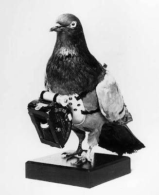pigeon_camera2.jpg