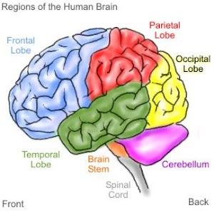 Inilah 9 Cara Membuat Otak Anda Berpikir Lebih Cepat