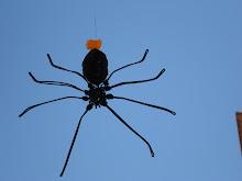 aranha de arame
