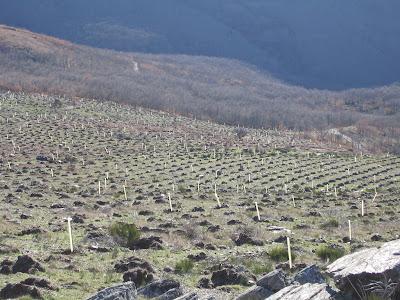 Resultado de imagen de blogspot repoblacion forestal