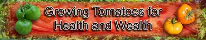 How to Grow Tomatoes for Health and Wealth